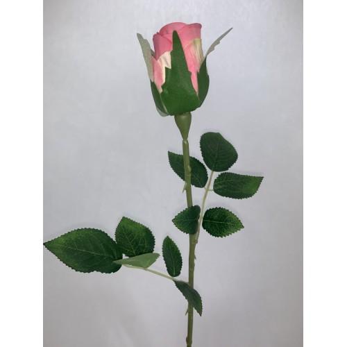 Róża pojedyncza kolor 3